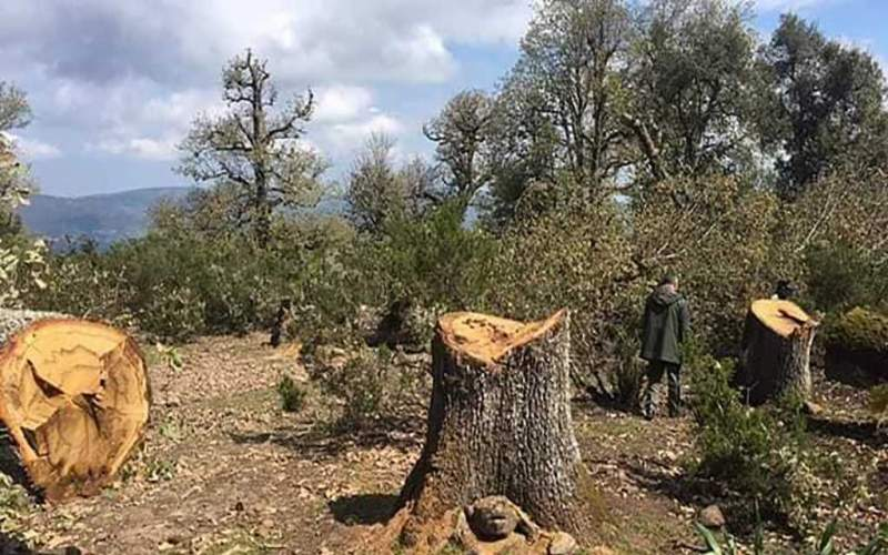 خط ساخن... بلّغوا عن القطع العشوائي للأشجار