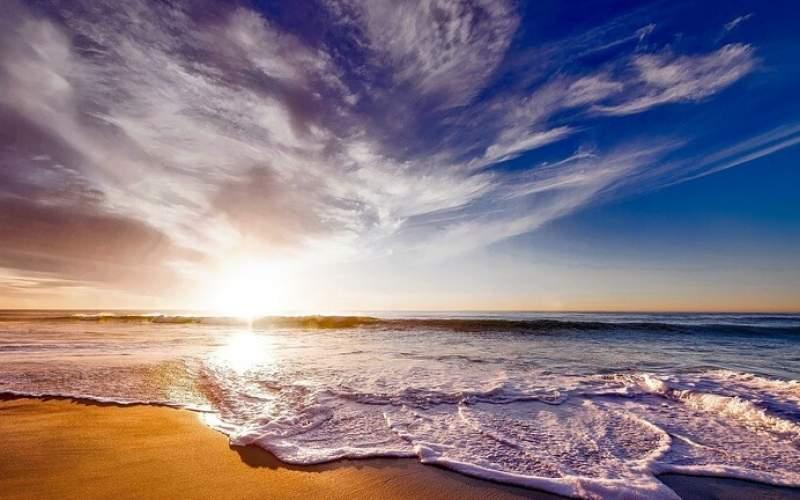 رصد مخلوق بحري على الشاطئ شبيه بالتنين يُعرف باسم