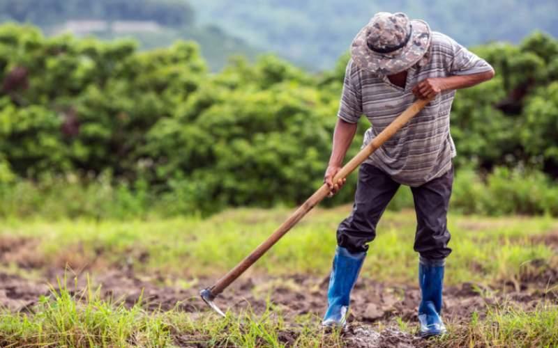 بعد أن أعياها ميشال شيحا وأَرْدتها عصابةُ الطائف… هل يمكن إعادة إحياء الزراعة؟