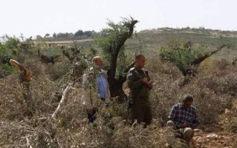 مستوطنون إسرائيليون يقطعون مئات الأشجار شمال شرق رام الله
